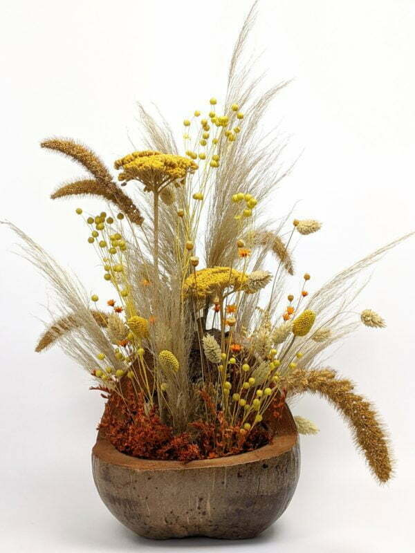 Composition de fleurs séchées dans une magnifique noix de coco naturelle pour décoration d'intérieur, Terracotta 2